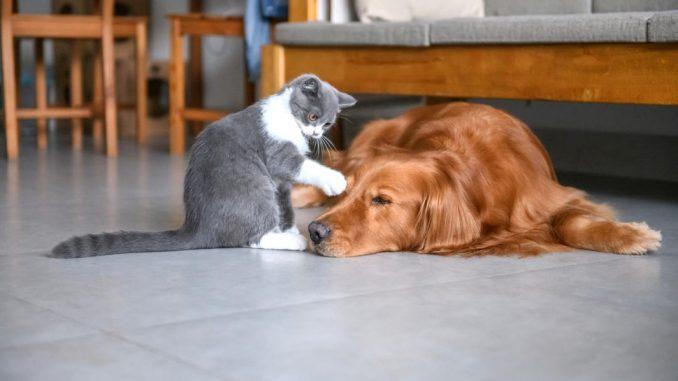Les différentes formules proposées pour une assurance chat
